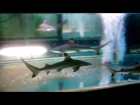 Chatuchak Market (Bangkok) - Pet section - Marine - Sharks - Aquarium
