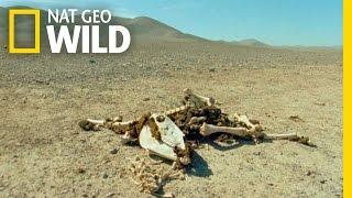 Survival Experts | Wild 24