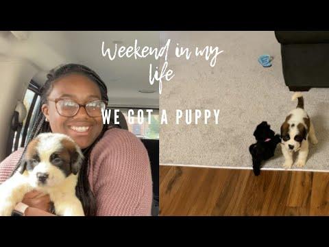 We Got A PUPPY St.Bernard   Weekend In My Life Vlog