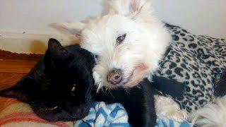 心を閉ざした老犬に寄り添い、孤独から救い出した老猫。ふたりの運命の出会いが全てを変える! thumbnail