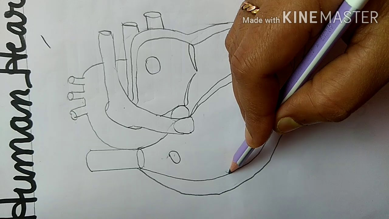 Science:- class - 8,9,10 diagram of heart - YouTube
