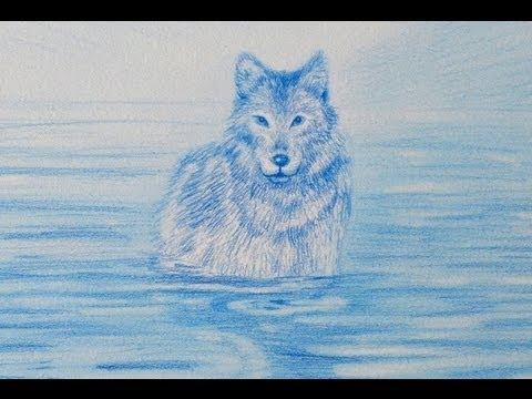 Cómo dibujar un lobo - Arte Divierte. - YouTube