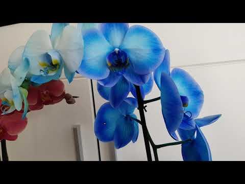 Орхидея 🥰голубая орхидея крашеная 💜розовая орхидея💜