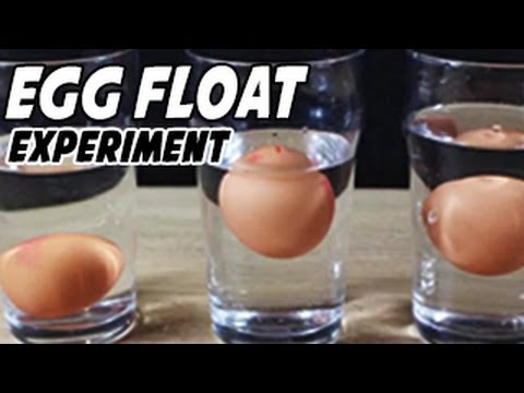 Egg Floating In Saltwater Experiment