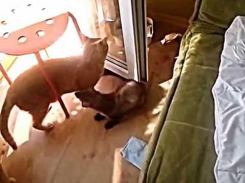 kuna zaczepia kota