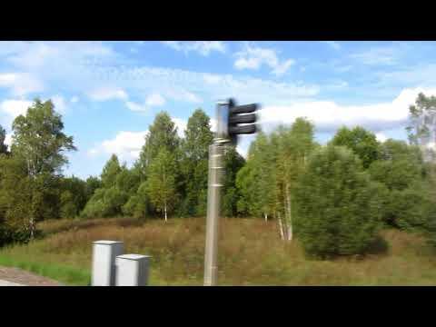 От станции Богушевская до станции Лужки снято по ходу движения дизеля Витебск-Орша наш лес
