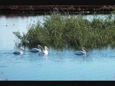 TULE LAKE AND LOWER KLAMATH NWRs OCT 2012