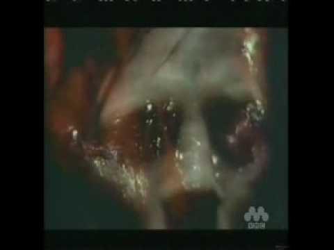 Ryuichi Sakamoto 坂本龍一 Love is the Devil 1998