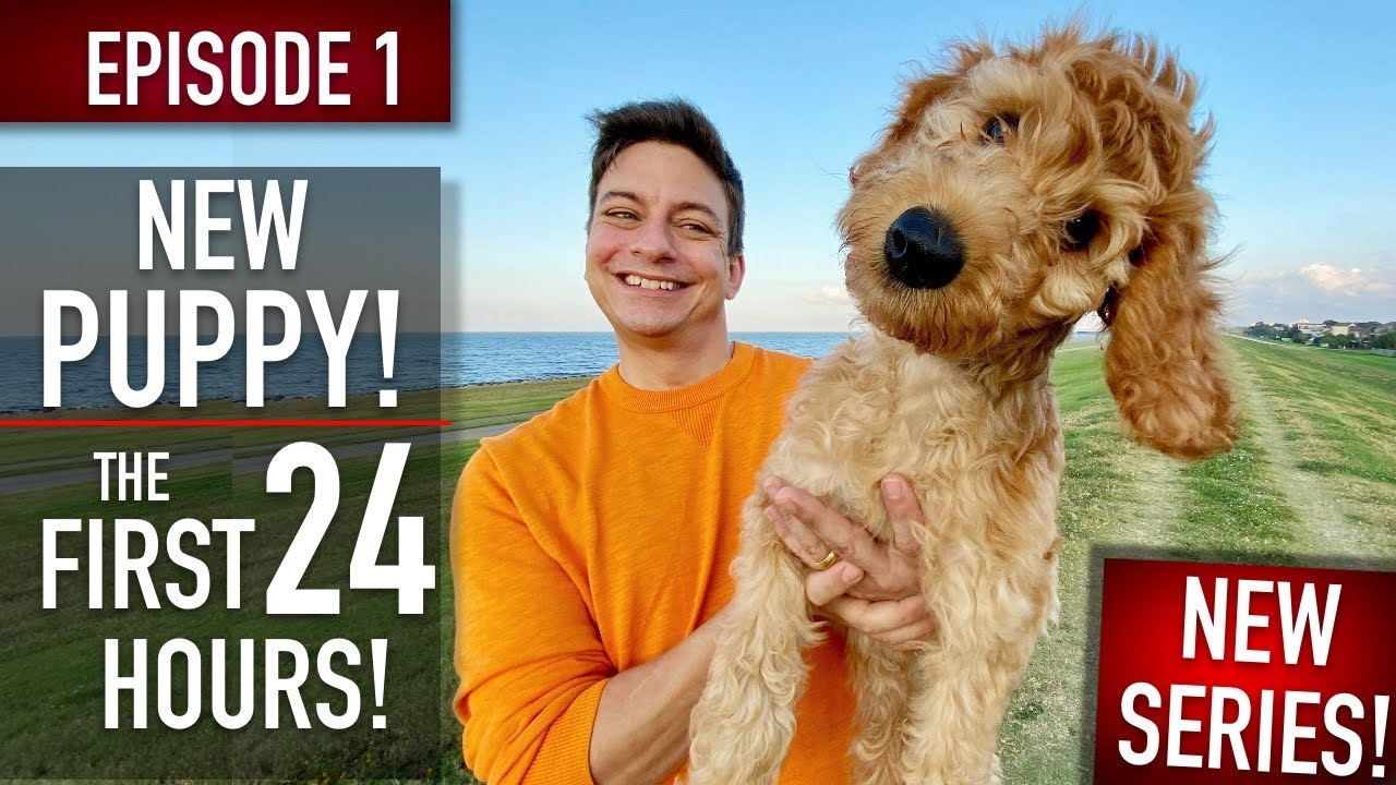 NEW PUPPY SURVIVAL GUIDE: The First 24 Hours! (NEW SERIES! EPISODE 1) - download from YouTube for free