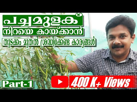 Green Chilly Farming | പച്ചമുളകിൽ ധാരാളം കായ്കൾ പിടിക്കാൻ തുടക്കം മുതൽ ശ്രദ്ധിക്കേണ്ട കാര്യങ്ങൾ