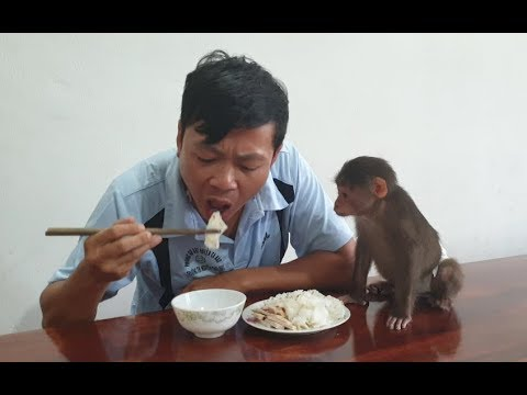 Baby Monkey | Doo Also Wants To Eat His Daddys Extra Meal