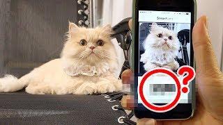 요지의 정체가 밝혀졌다..!! 네이버 스마트렌즈 검색 결과(두둥)  | 김메주와고양이들