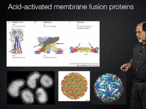 Ari Helenius (ETH Zurich) Part 2: Endocytosis and Penetration
