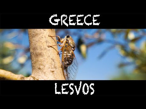 GREECE   LESBOS TRAVEL VIDEO with DISA TRAVEL (fast EDIT) I NOAH PETEK I UHD 3840 x 2160