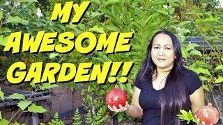 Cambodian Garden: MY AWESOME GARDEN!!