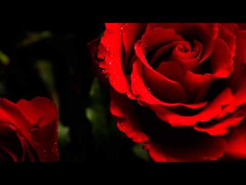Red Roses For A Blue Lady -  Bert Kaempfert and His Orchestra -