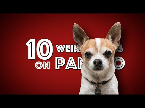 10 Weird Things On my Chihuahua Pancho
