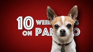 10 Weird Things On my Chihuahu…
