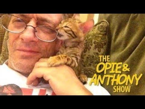 Opie Vesves Anthony: Ants New Kitten (09/03/13)