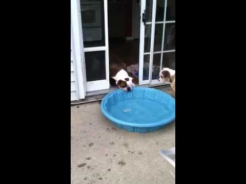 Gus vs. Pool