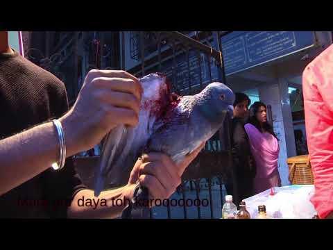 Save Birds | Jeevdaya Abhiyan | A song for innocent lives