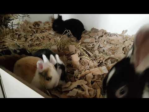 Onze babykonijnen! Nu 3 weekjes oud.