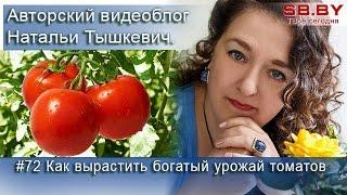 #72 Как вырастить богатый урожай томатов