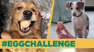 My Dog Mastered The Egg Challenge thumbnail