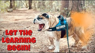 Reuben the Bulldog: The Amazing Bulldog Volume 3