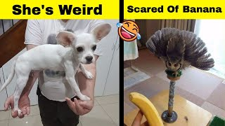 People Are Sharing The Weirdest Things Their Pets Do