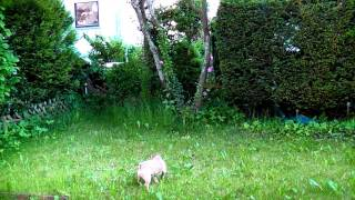 High Precision And Endurance Training For Little Sweet Dog And Quadrocopter (mqx)