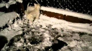 雪の上ではめちゃめちゃ強いウエスティ・チャン.
