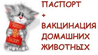 Прививки для кота\ВАКЦИНАЦИЯ ДОМАШНИХ ЖИВОТНЫХ