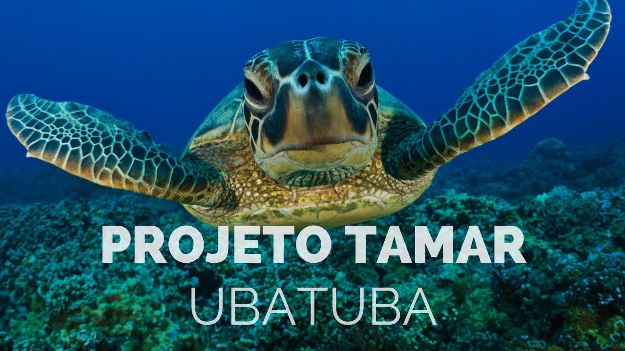 Projeto Tamar Ubatuba Um Passeio Inesquecível Youtube