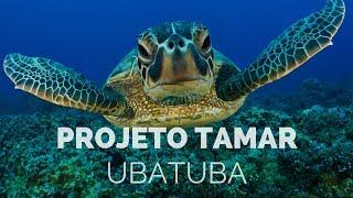 🐢 Projeto Tamar Ubatuba - Um Passeio Inesquecível!