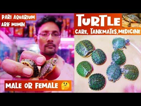 Turtle || Turtle Care, Turtle Male & Female, Turtle Disease & Treatment, Tankmates || Pari Aquarium