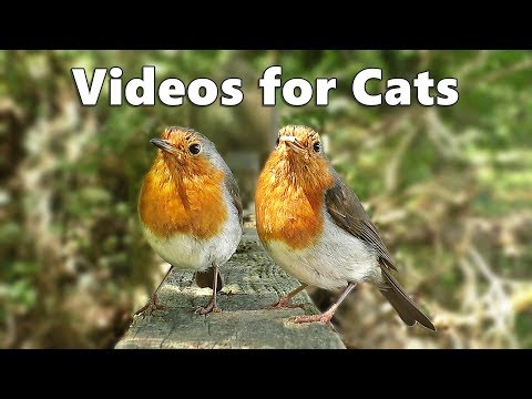 Videos for Cats and Dogs to Watch : Birds Spectacular