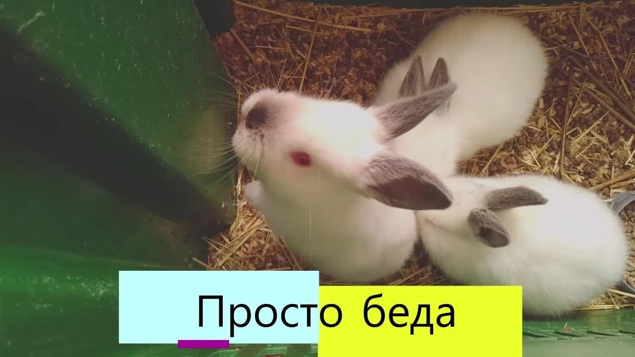 Крольчиха родила%Что будет с КРОЛЬЧАТАМИ