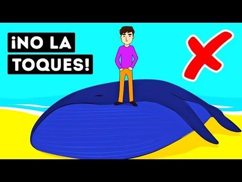 ¿Por Qué Las Ballenas Muertas Son Tan Peligrosas?