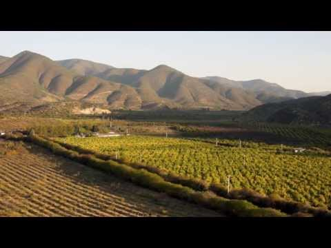 Introduction to the Galt's Gulch Chile Organic Farm