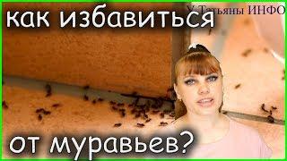 Как избавиться от муравьев в доме или квартире?!