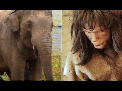 Cavemen Ate Elephants Half A Million Years Ago – To Boost Their Brain Power