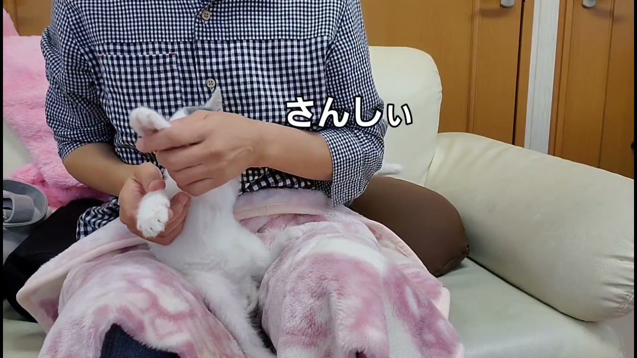 保護猫 子猫のちびちゃん 寝たきりから復活!   1カ月後
