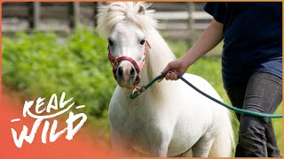 Meet Princess Confetti, The Guide Horse! | Real Wild  Shorts