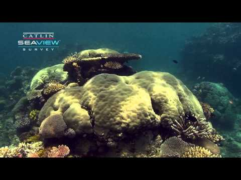 Seaview Survey Video: Coral Reefs