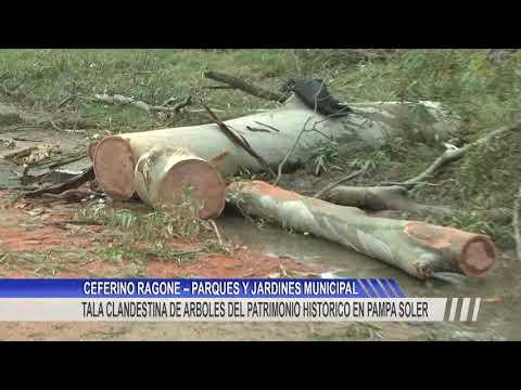 Detuvieron a dos personas por la tala de árboles históricos en Pampa Soler