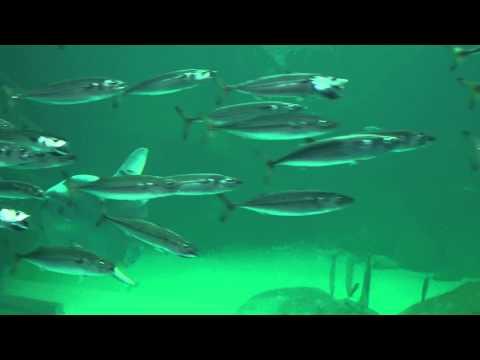 Nordsøen Oceanarium [4k]