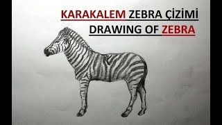 Zebra Drawing / Pencil Drawing Easy Zebra Drawing / How to Draw a Zebra?