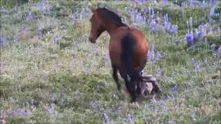 Как живут лошади (очень красивое видео)