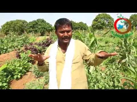 Natural Farming | A Model of Integrate Agricultural Farm